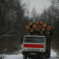 A truck loaded with Korean pine makes clear that the tigers' habitat is being destroyed.
