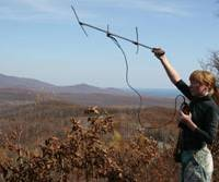 Looking out: A Russian biologist with the Wildlife Conservation Society tracks one of the tigers in the Sikhote Alin Reserve that has been fitted with a radio-transmitter collar.