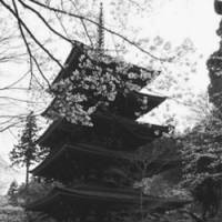 Flower tower: A pagoda at Hasedera Temple, which is famed for its flowers.
