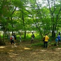 Semi sanctuary: Collecting cast-off cicada shells as part of a survey of the cicada population in a copse on the east side of Kodaira Chuo Park — the part that will be cut down to make way for the road. | MAKOTO OSAWA