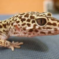 Reptiles take center stage at scaly sale