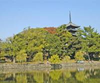Glorious greenery: With the five-storied Kofukuji pagoda in the background, Sarusawa Pond (above) is close to the old Naramachi merchant district. Staff pound the sticky confection of green-tea mochi in a store on Nara's main street.