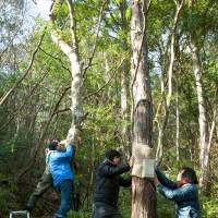 Nature calls: 'Forest Symphony,' an upcoming collaborative art/music project between Ryuichi Sakamoto and the Yamaguchi Center for Arts and Media, will be part of activities marking the 10th anniversary of the city-funded art center. | SHINICHI ITO