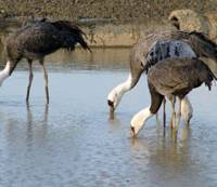 Celebrating a life with cranes