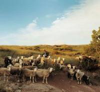 Simple life: Goats are herded in 'Modern Life.' | © RAYMOND DEPARDON / MAGNUM PHOTOS