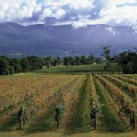 Recovered: Though some vineyards in Yarra Valley in Australia's Victoria state were damaged by wildfires in February of this year, they have been quick to rebuild. Above: Yarraburn Vineyards | © AUSTRALIAN WINE EXPORT COUNCIL
