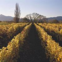 In deep: Dog Point's vines date back to the 1980s, a relatively old vine stock for New Zealand Sauvignon, which means they have deeper roots that better absorb minerals.