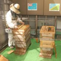 Hive-minded: A Ginza Honey Bee Project member checks some of the hives on the roof of the Pulp & Paper Building high above central Tokyo's bustling Ginza district.