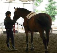 Gool Wadia adjusts the side reins as she prepares to lunge the horse in the indoor riding arena at the farm.