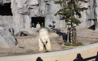 Lulu the polar bear is observed by visitors from all directions.