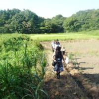 Close to nature: Youths from overseas walk with local residents through a marsh at Yatsu, in the suburbs of Abiko, Chiba Prefecture, on Wednesday. | MAMI MARUKO PHOTO