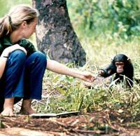 Primal pals: Young researcher Jane Goodall tries to connect with a baby chimpanzee named Flint in 1964. The park she is sitting in has become Tanzania's Gombe National Park. Right: Jane Goodall addresses students at Yokohama International School on Sept. 10. | © THE JANE GOODALL INSTITUTE / HUGO VAN LAWICK; SATOKO KAWASAKI