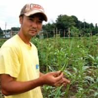 Finance to farming: Setsuo Nakagoshi, a former financial securities specialist, holds up an organic okra from his Watashi no Hata farm. | MELINDA JOE PHOTO