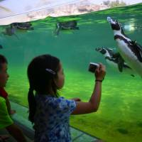 Underwater worlds: Up close with the penguins at Tokyo Sea Life Park. | JASON JENKINS