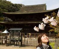 Beauty beheld: A visitor admires the cherry blossom at Kozan-ji Temple (top), a National Treasure in Shimonoseki, Yamaguchi Prefecture, on the southwestern tip of Honshu. Others may prefer to feast their eyes on the prefecture's famed Hagi pottery (above). In times past these cannon at Shimonoseki (below) aimed to stop foreigners from entering from Kyushu to do that or more. | PERRIN LINDELAUF