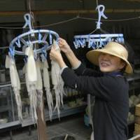 Freshly caught squid are hung out to dry beside the road up Kasayama.