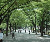 Green scene: Office workers stroll by the Tosabori River on Nakanoshima Island.