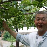 High-end grape grower has no TPP gripe, just sees green