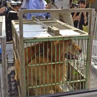 If it could talk: Police have impounded a dog belonging to a 63-year-old man being sought in connection with the slaying of five people Sunday and Monday in Shunan, Yamaguchi Prefecture. | KYODO