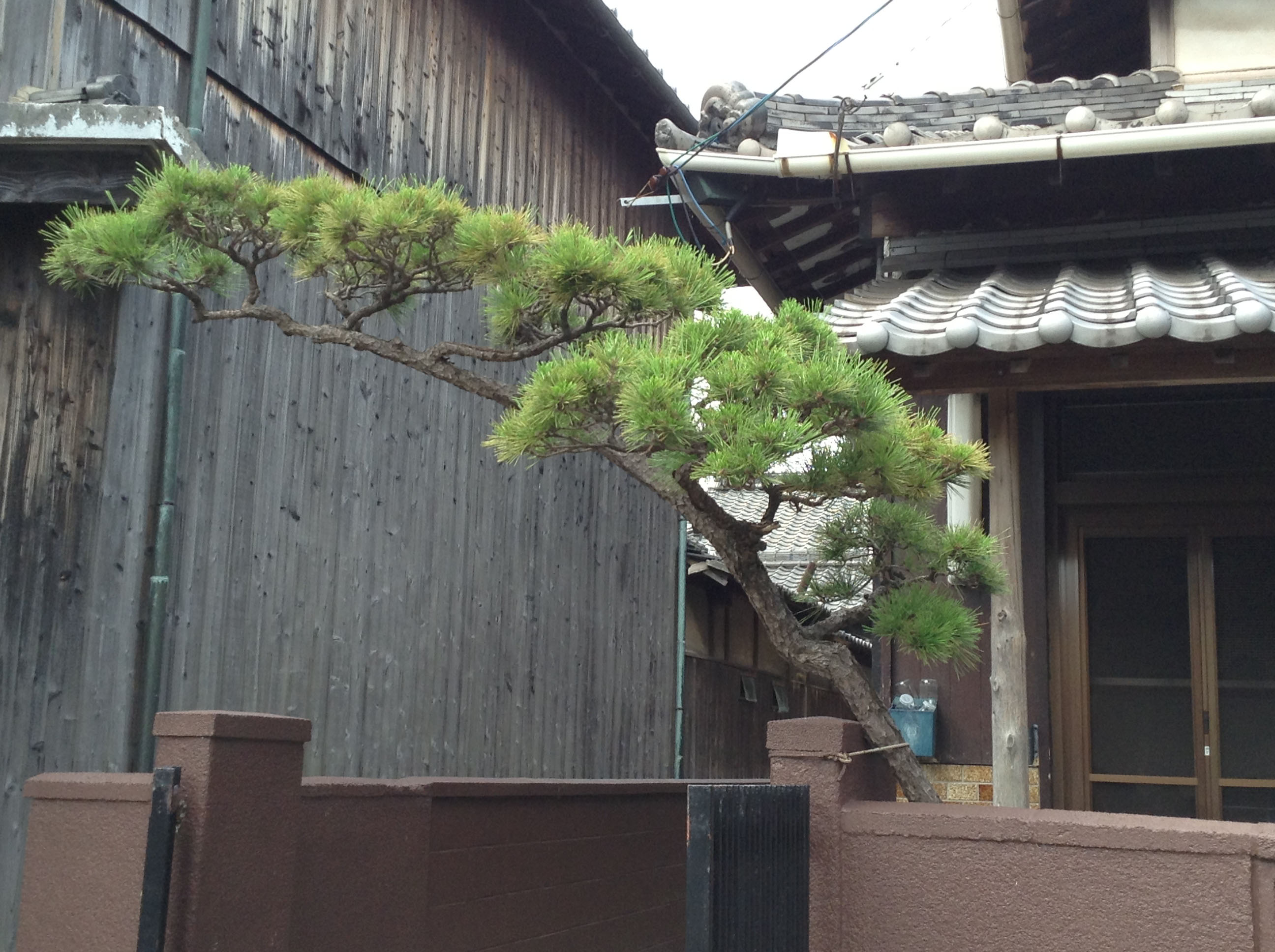 The pine branch arching over the entrance to a house is a common Japanese landscaping technique. The pine tree is a symbol of longevity in Japan.   AMY CHAVEZ