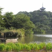 Taste of Kyoto: A three-story pagoda dating from 1457 that was moved from a Kyoto temple overlooks the vast Sankeien Japanese garden in Yokohama. It is one of the garden's 12 structures, most of which are designated national cultural heritage. | SATOKO KAWASAKI PHOTO