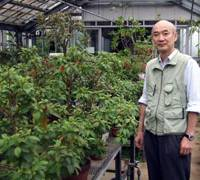 Unique flora: Jin Murata, director of the Botanical Gardens at the University of Tokyo, shows off plants unique to the Ogasawara Islands last week. | KYODO PHOTO