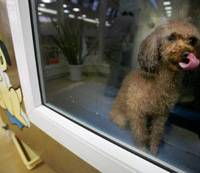 Pooch polish: A poodle gets dried off following a shampoo in a 'dog wash machine' at a pet shop in Tokyo in March. The 30-minute course for tear-free shampoo, rinse and blow-dry costs 1,000 yen. | AP PHOTO
