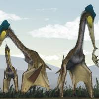 Suppertime: A group of azhdarchid pterosaurs, whose wingspans could exceed 10 meters, forage for food. Recent research suggests that pterosaurs were active flyers rather than gliders as scientists long believed.   MARK WITTON, DARREN NAISH