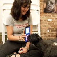 Puppy pads: Anna Grossman, who has taught dozens of dogs how to use touch-screen devices, holds an iPad while her dog Amos touches the screen with his nose. | AFP-JIJI
