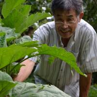 Avid gardener Hiroshi Uchikawa, 64, with an eggplant grown from seeds he got at the Usui's seed bank. | WINIFRED BIRD