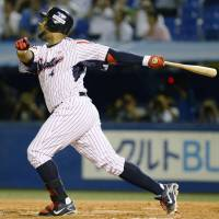 Don't stop: Wladimir Balentien watches his Japanese baseball record-tying 55th home run of the season clear the wall in right field during Tokyo Yakult's 6-2 loss to the Carp on Wednesday night.   KYODO