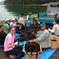 Local business: It's Not Just Mud volunteers help with the seaweed harvest in Funakoshi, a village outside Ishinomaki.   COURTESY OF IT'S NOT JUST MUD