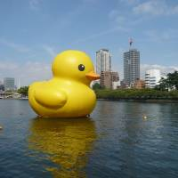 Public bathtime: Dutch artist Florentijn Hofman's giant floating rubber duck sculpture visits Osaka in 2009. The duck comes back to the city this weekend.