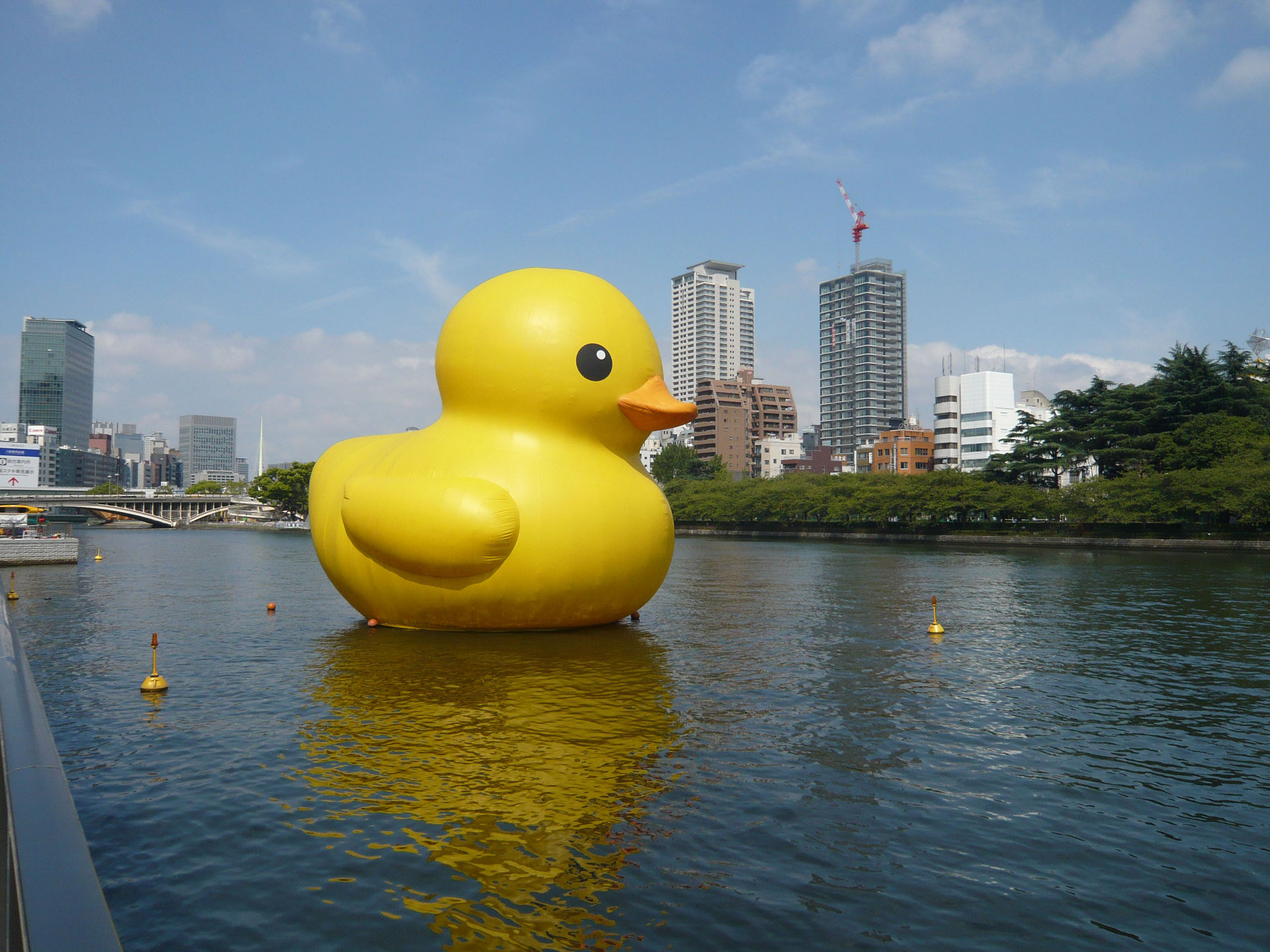 Giant Duck To Make Its Return The Japan Times