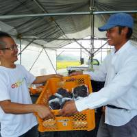 Know your grower: Takahisa Fujino (left), representative of a farmers' group called Agriinno Co. in Okayama Prefecture, receives grapes from a farmer in the town of Shoo in September to be supplied to customers of the Yasaibin website launched by Cookpad Inc.   KYODO