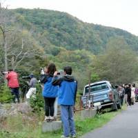 Tourists take photographs of a brown bear near Shari on Oct. 12. | KYODO
