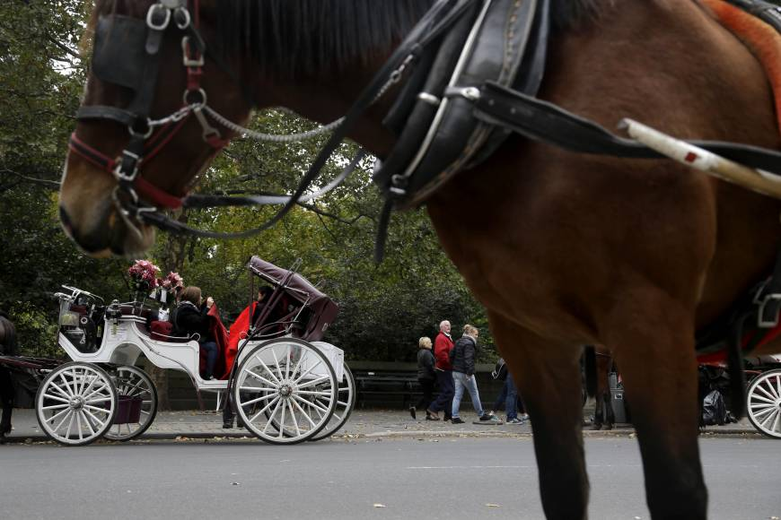 N.Y. horse carriages threatened