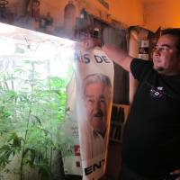 Out of the closet: Julio Rey grows marijuana plants in a makeshift cabinet Oct. 20 in Florida, Uruguay | THE WASHINGTON POST