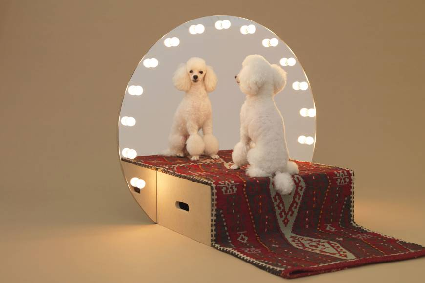 It's a dog's life, but architects can find ways to improve it