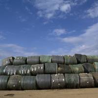 Ethanol from cellulose falls short of expectations