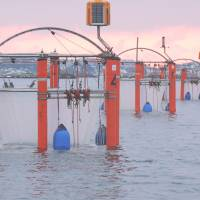 Acid tests: Floating cages in Gullmar Fjord off the west coast of Sweden are used to help study ocean health. | AP
