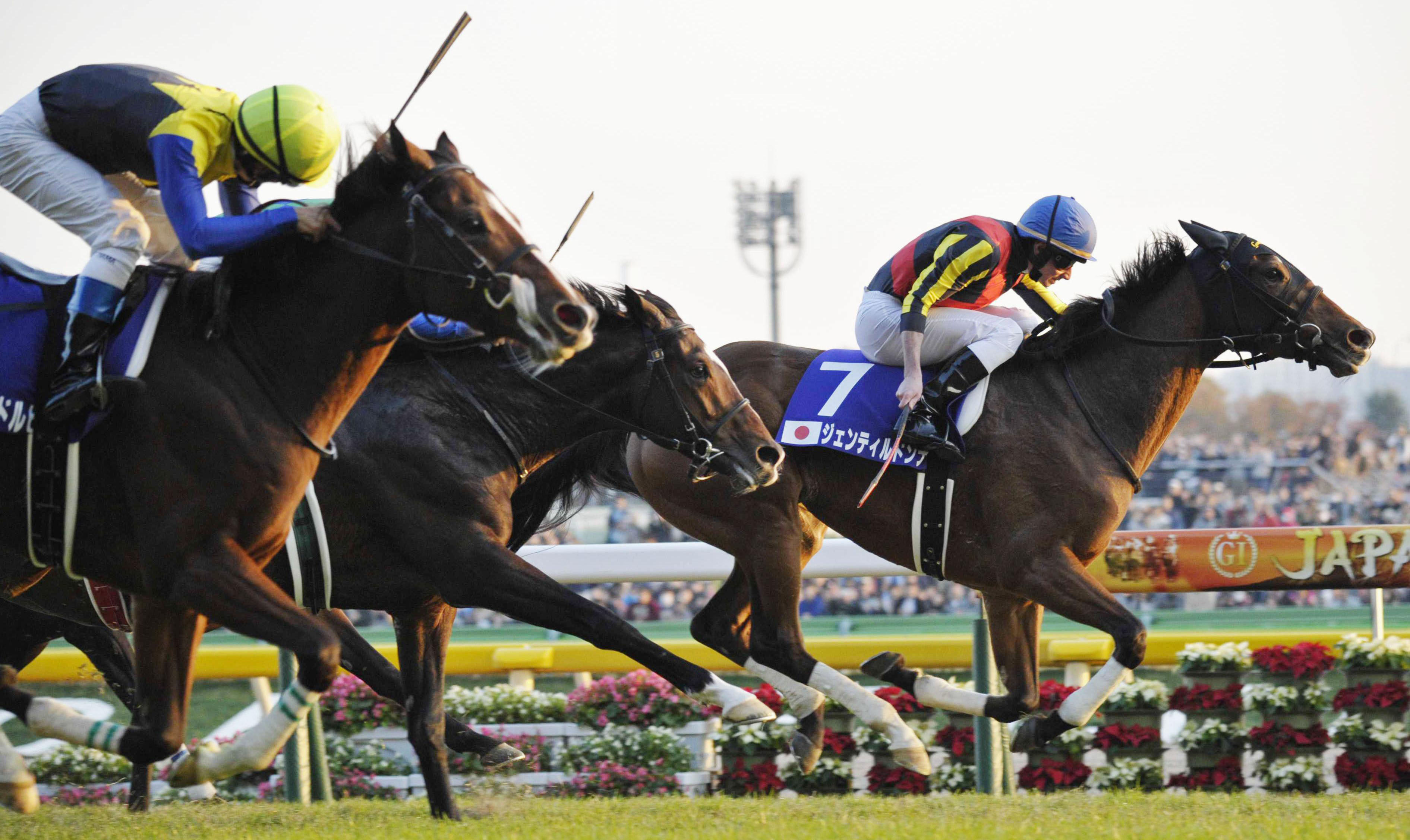 Do it again: Gentildonna races ahead of the competition to win the Japan Cup at Tokyo Racecourse on Sunday for a second straight year. | KYODO