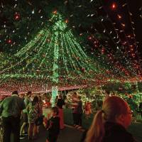 Festive scenery: People gawk at the Richards' home, illuminated with over half a million miniature lights, in Canberra on Sunday. | AP