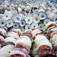 A picturesque pile of scallop shells on Kurahashi Island in Hiroshima Prefecture. | ANGELES MARIN CABELLO