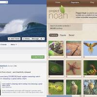 Animal instincts: Screenshots of Stumpy the whale shark's Facebook page and Project Noah's social-networking site.