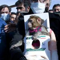 Bonzo goes to space: In this photo released on Saturday by the Iranian Students News Agency, a man carries a monkey during a mission to send it into space.   AP