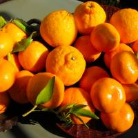 Sweet and sour: Citrus fruit is abundant in Japan, and is believed to be one of the first types of fruit cultivated here. | MAKIKO ITOH