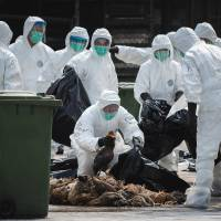 Foul play: Officials wearing masks and protective suits pile dead chickens into black plastic bags in Hong Kong Tuesday following mass cull of 20,000 chickens after the deadly H7N9 bird flu virus was discovered in poultry imported from mainland China. | AFP-JIJI