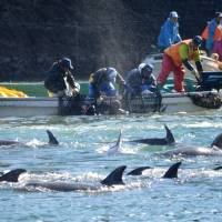 Campaigners rally against Japan's dolphin hunting