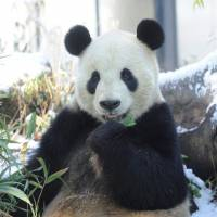 Winter could be the best season to visit the zoo